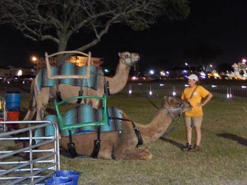 Real Camels at Myrtle Beach Octoberfest Rides