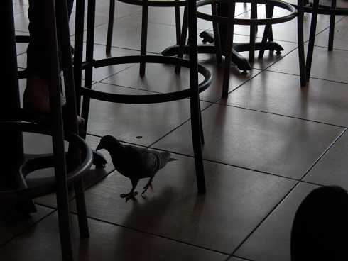 One of the locals in for the floor buffet, they never stay long.